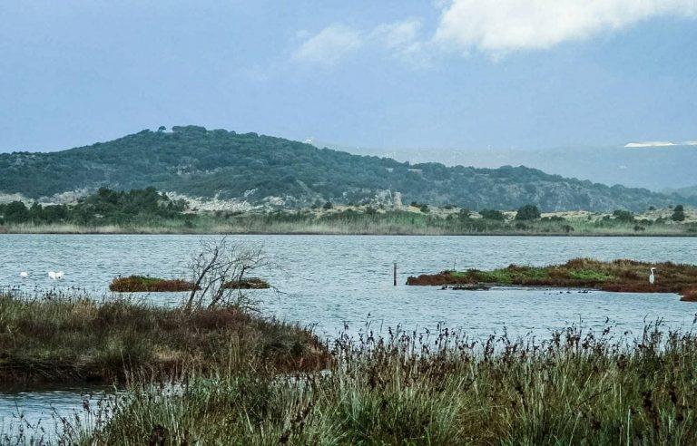 Ερωδιοί και Φλαμίνγκο στη λιμνοθάλασσα της Γιάλοβας, γράφει η Γιάννα